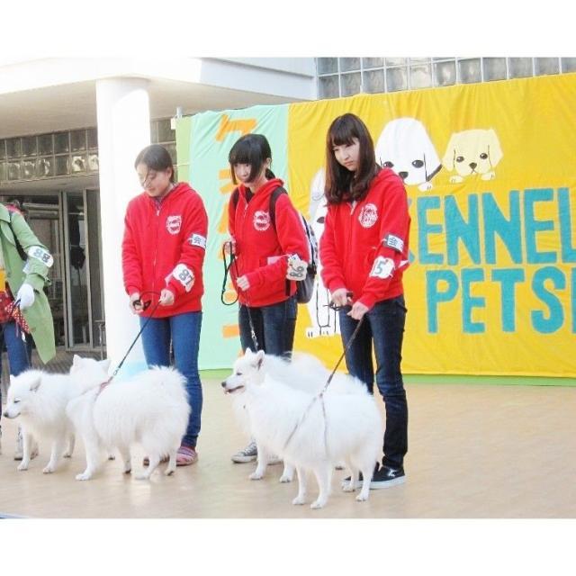 日本獣医生命科学大学 11/2(土)・11/3(日)オープンキャンパスを開催します!1