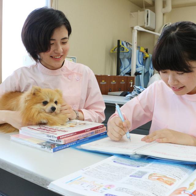 東京スクール・オブ・ビジネス 家庭でもできる!ワンちゃんの健康チェック~ペット看護実習~1