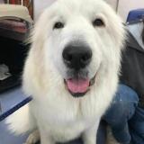 トリミング体験~☆大型犬のシャンプーに挑戦!★~の詳細