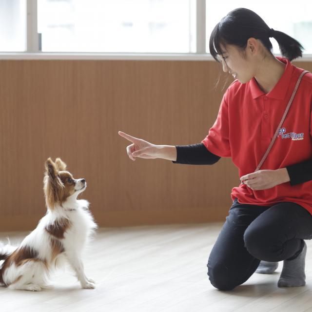 仙台総合ペット専門学校 動物のお仕事を体験しよう!【無料送迎バス運行!】3