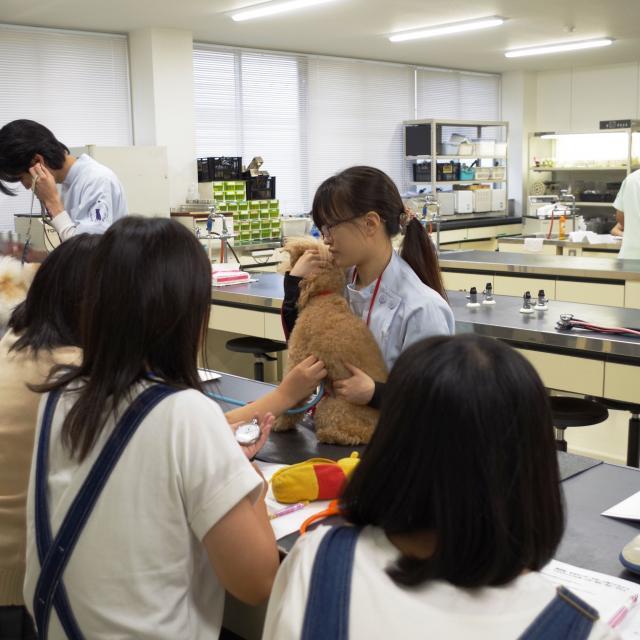 湘央生命科学技術専門学校 ためになる♪アニマルナーシング☆夏休みの体験入学2