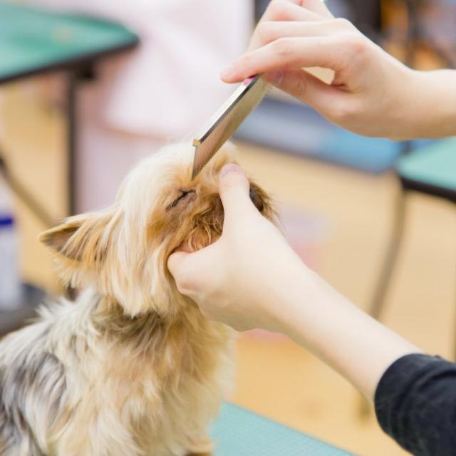 YICビジネスアート専門学校 6/24(日)【ペット】犬のお耳につけるアクセサリー作り1