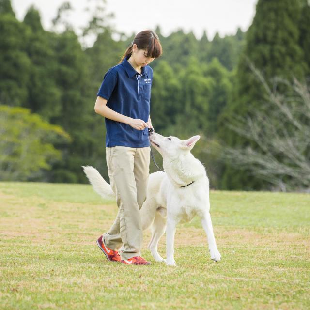 専門学校ちば愛犬動物フラワー学園 コース別オープンキャンパス2