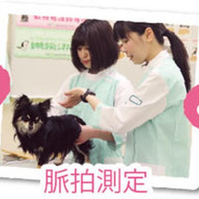 大阪ECO動物海洋専門学校 【動物看護師体験】ネコちゃんの看護師さん体験2