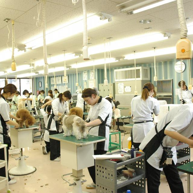 東北愛犬専門学院 体験入学2018 サマースクール特別プログラム3