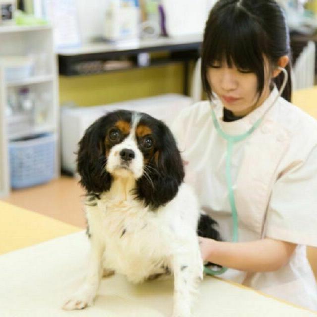 YIC情報ビジネス専門学校 【予約フォーム】トリマー・動物病院スタッフの仕事(ペット)1