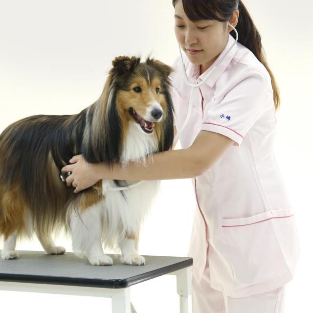 京都動物専門学校 動物看護師になりたい人のための体験入学会!!3