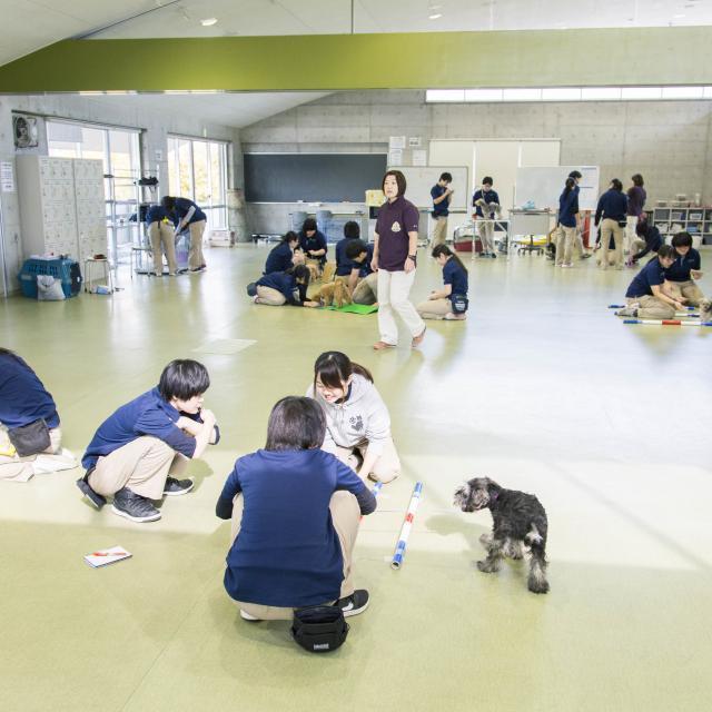 専門学校ちば愛犬動物フラワー学園 オープンキャンパスinおゆみ野ドッグサイト3