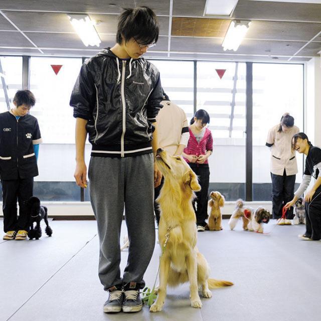 大阪ビジネスカレッジ専門学校 大型犬のトレーニング1