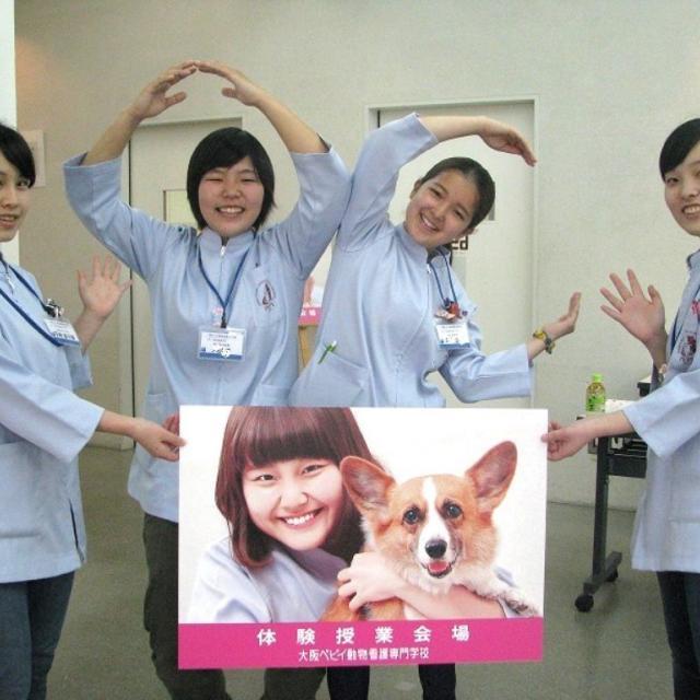 8月オープンキャンパス!動物病院で行う身体検査
