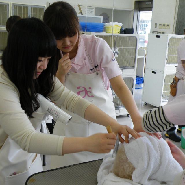 愛犬美容看護専門学校 半日オープンキャンパス☆時間のない方もお気軽に体験できます♪3