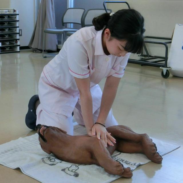 京都動物専門学校 超レア体験!ペットファーストエイド!3