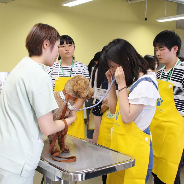 ヤマザキ動物看護大学 オープンキャンパス 20191