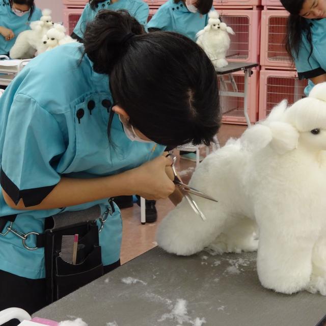 YIC京都ペット総合専門学校 ドッグマネキンのカット実習体験1
