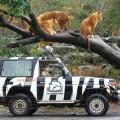 野生動物・環境保護 体験レッスン
