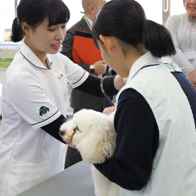 国際動物専門学校 学校説明会1
