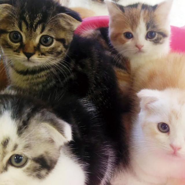 どの猫がスキ?~猫の種類を知ろう~