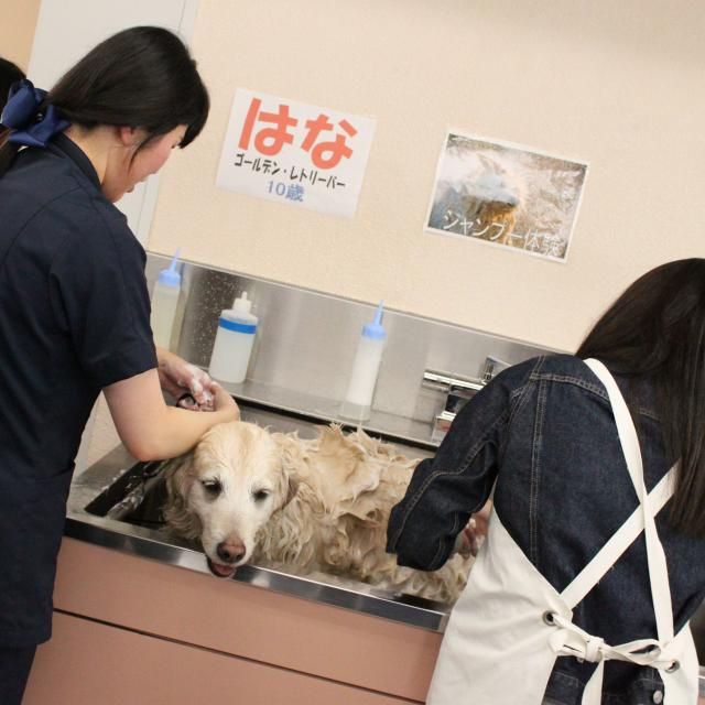 中央動物専門学校 新3年生対象体験入学3