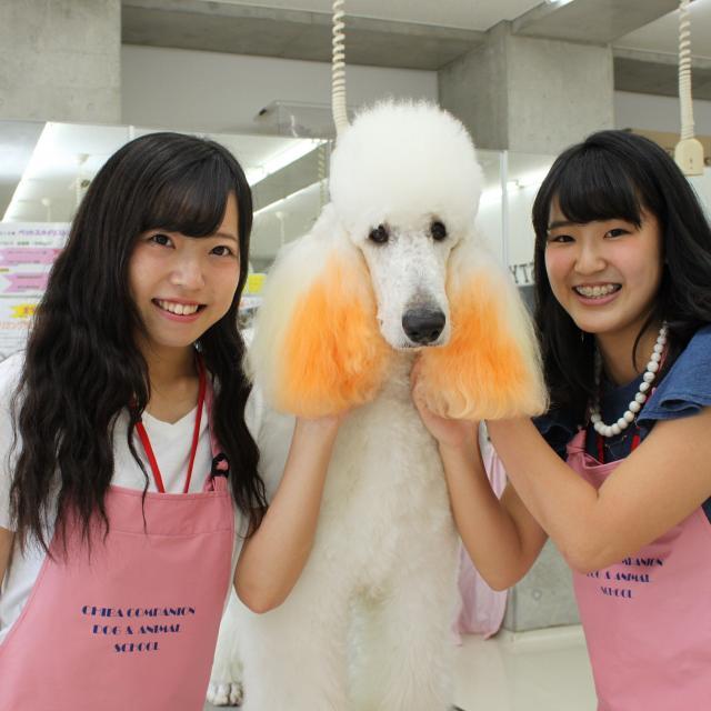 専門学校ちば愛犬動物フラワー学園 オープンキャンパス1