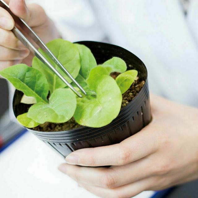 東京バイオテクノロジー専門学校 【植物バイオコース】オープンキャンパス:バイオのコース体験2