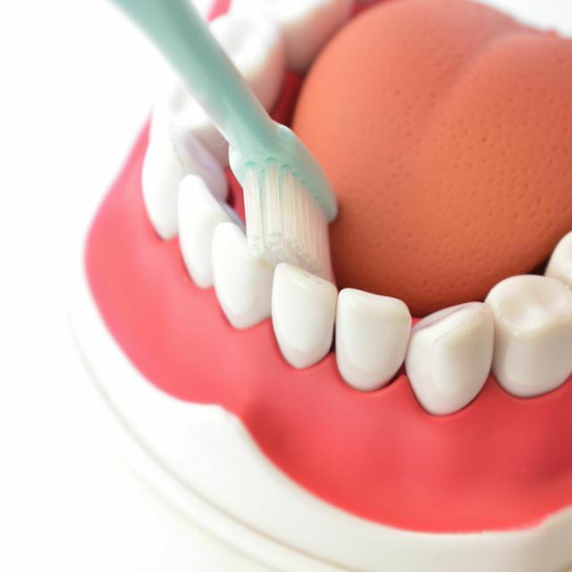 YIC情報ビジネス専門学校 【予約フォーム】歯の名称を知ろう!(医療事務)1