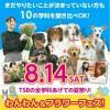 東京スクール・オブ・ビジネス 【愛玩動物看護学科】夏祭り!わんわん&フラワーフェス