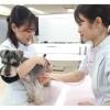 大阪ビジネスカレッジ専門学校 はじめてでも大丈夫!動物看護師のおシゴト体験