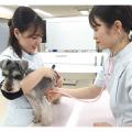 大阪ビジネスカレッジ専門学校 動物看護師のお仕事体験