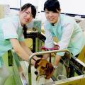 大阪ECO動物海洋専門学校 ワンちゃんの看護師さん体験