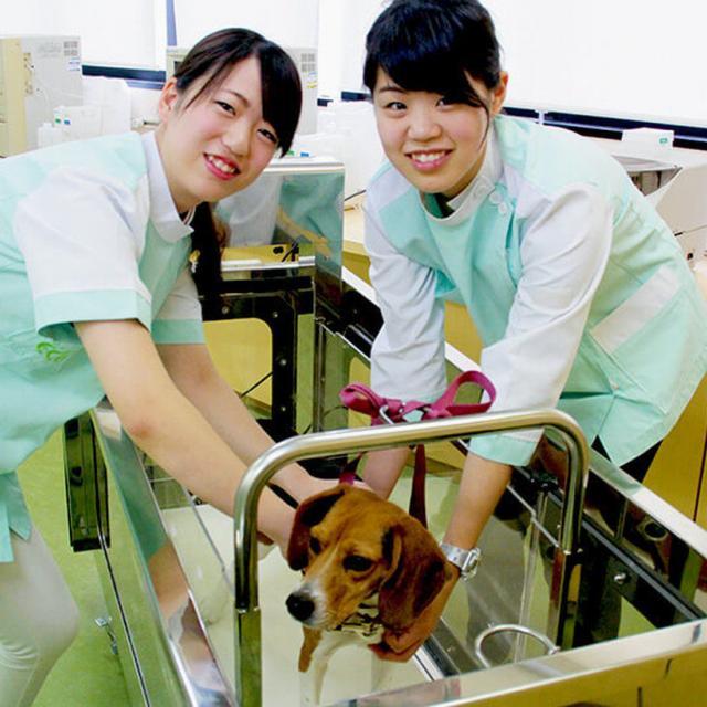 大阪ECO動物海洋専門学校 ワンちゃんの看護師さん体験1