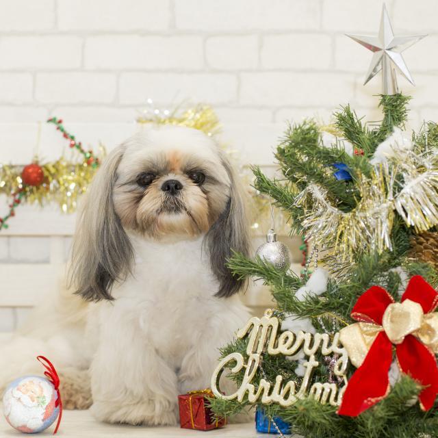 北海道どうぶつ・医療専門学校 ☆スペシャルイベント☆わんこと一緒にクリスマスパーティ♪♪3