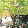 共栄大学 オープンキャンパス2018【盛夏】
