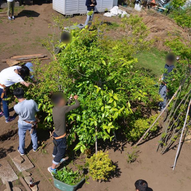 日本ガーデンデザイン専門学校 在校生が教える 庭の樹木の剪定4