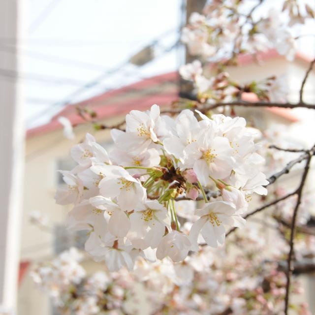 森ノ宮医療学園専門学校 新高校2・3年生対象 春のスペシャルオープンキャンパス3