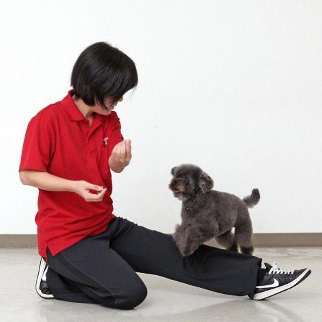 専門学校セントラルトリミングアカデミー 『ドッグトレーニング』体験+ペットクッキング2