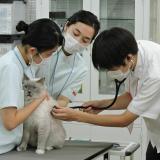 動物好きあつまれ!体験授業&学校説明会【7・8月】の詳細