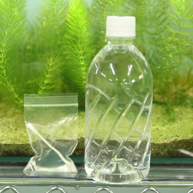 日本自然環境専門学校 あなたの水そう、水質診断します!3