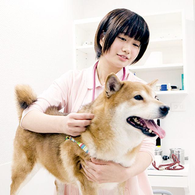 名古屋ECO動物海洋専門学校 【動物看護師】2