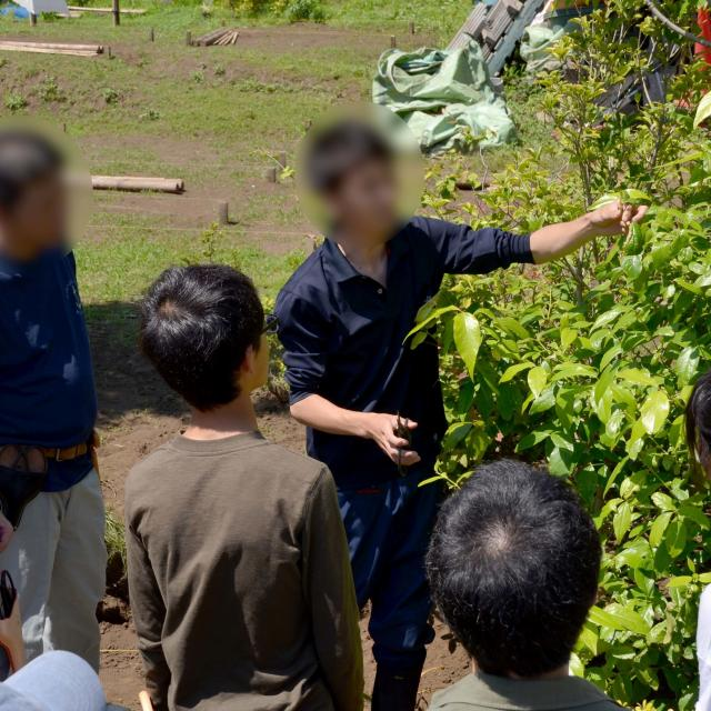 日本ガーデンデザイン専門学校 在校生が教える 庭の樹木の剪定1