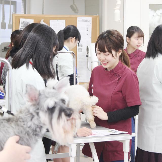専門学校岡山ビジネスカレッジ 愛犬美容・看護学科オープンキャンパス2