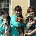 愛知ペット専門学校 担当犬体験(被毛ケア編)