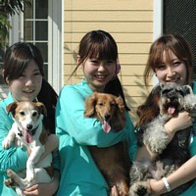 愛知ペット専門学校 担当犬体験(総合基礎編)1