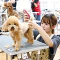 専門学校 九州スクール・オブ・ビジネス 9月の体験入学(トリマー/動物看護/ドッグトレーナー)
