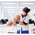 大阪ビジネスカレッジ専門学校 トリマーのお仕事体験