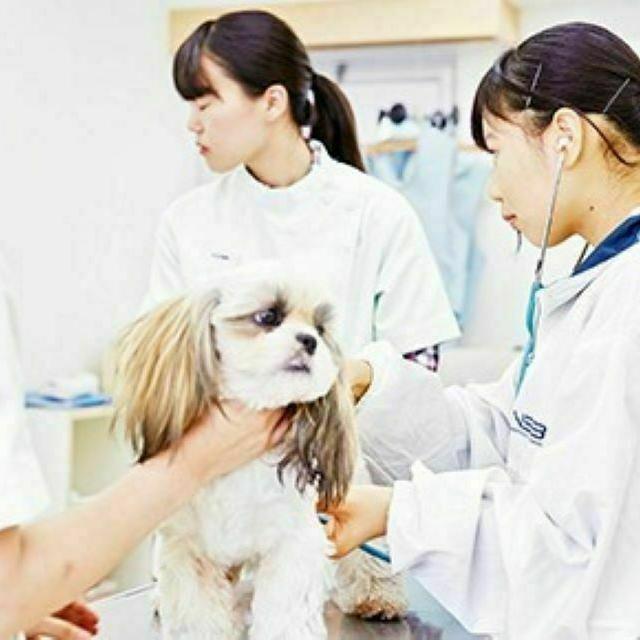 東京スクール・オブ・ビジネス 動物医療現場で活躍する!愛玩動物看護学科☆体験入学☆1