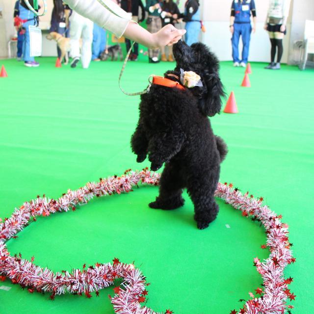 専門学校ちば愛犬動物フラワー学園 オープンキャンパス~バレンタインスペシャル~4