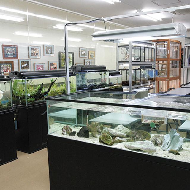 名古屋ECO動物海洋専門学校 【水族館アクアリスト】3