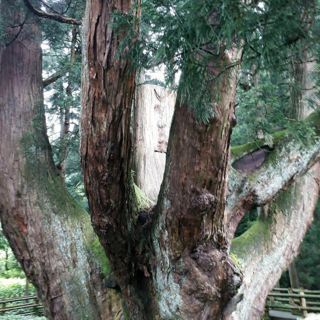 日本自然環境専門学校 樹木医と行く!巨木ツアー2