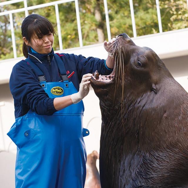 東京コミュニケーションアート専門学校 アシカ・アザラシの飼育方法を学ぼう!1