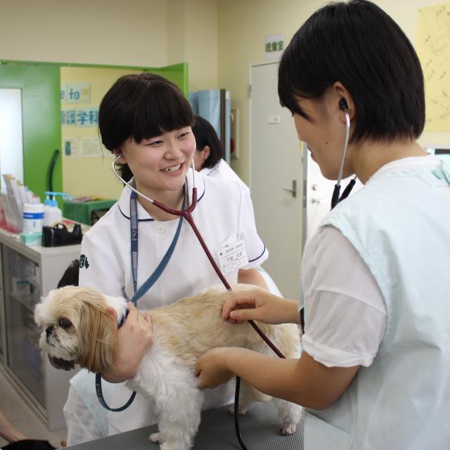 動物看護系!学科別体験入学★